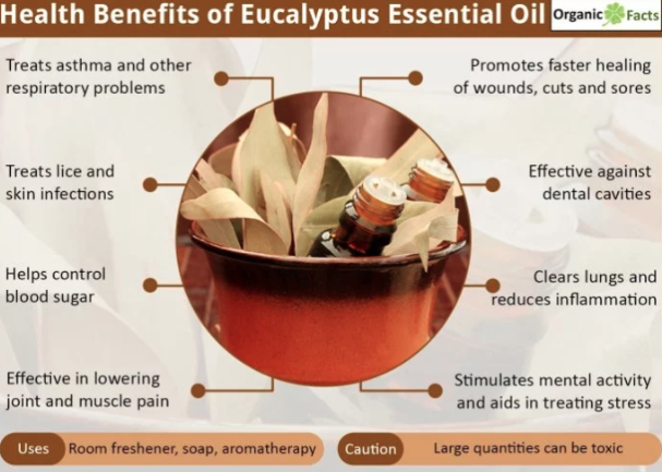 Health benefits eucalyptus self care tips